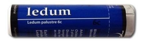 Owen Homeopathics - Ledum